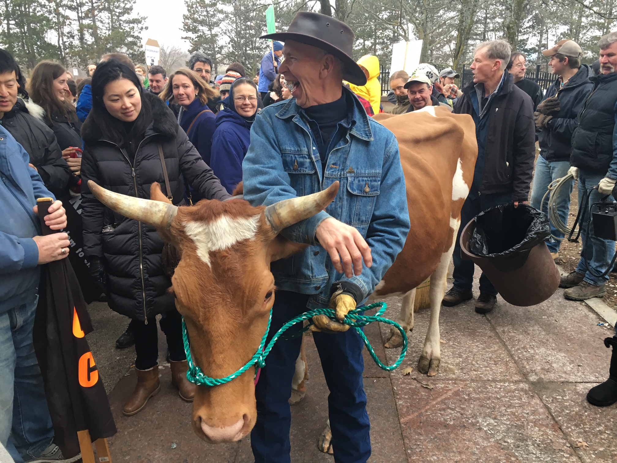 crowd of raw milk supports gather around a brown cow while paul nobel in a denim jacket leads her on a rope