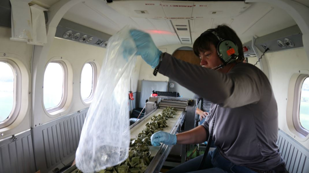 a person inside a helicopter organizing rabies vaccines