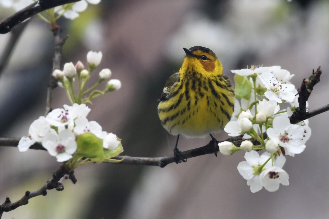 a yellow bird on a branch
