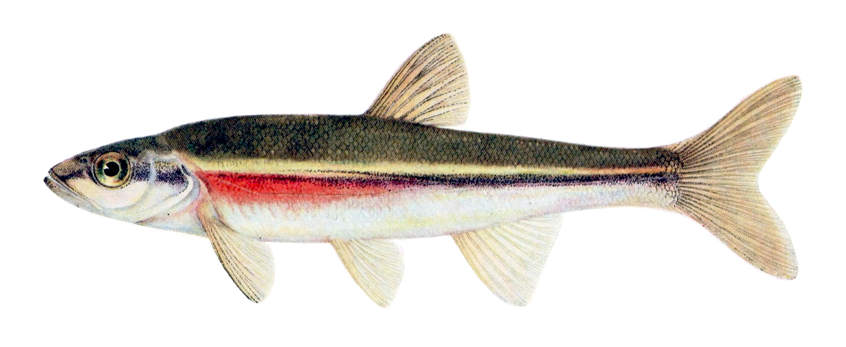 a green and orange fish