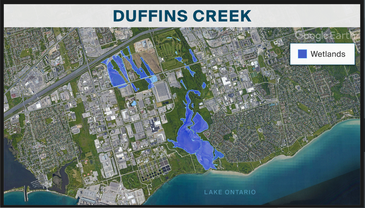 map showing the Duffins Creek wetlands