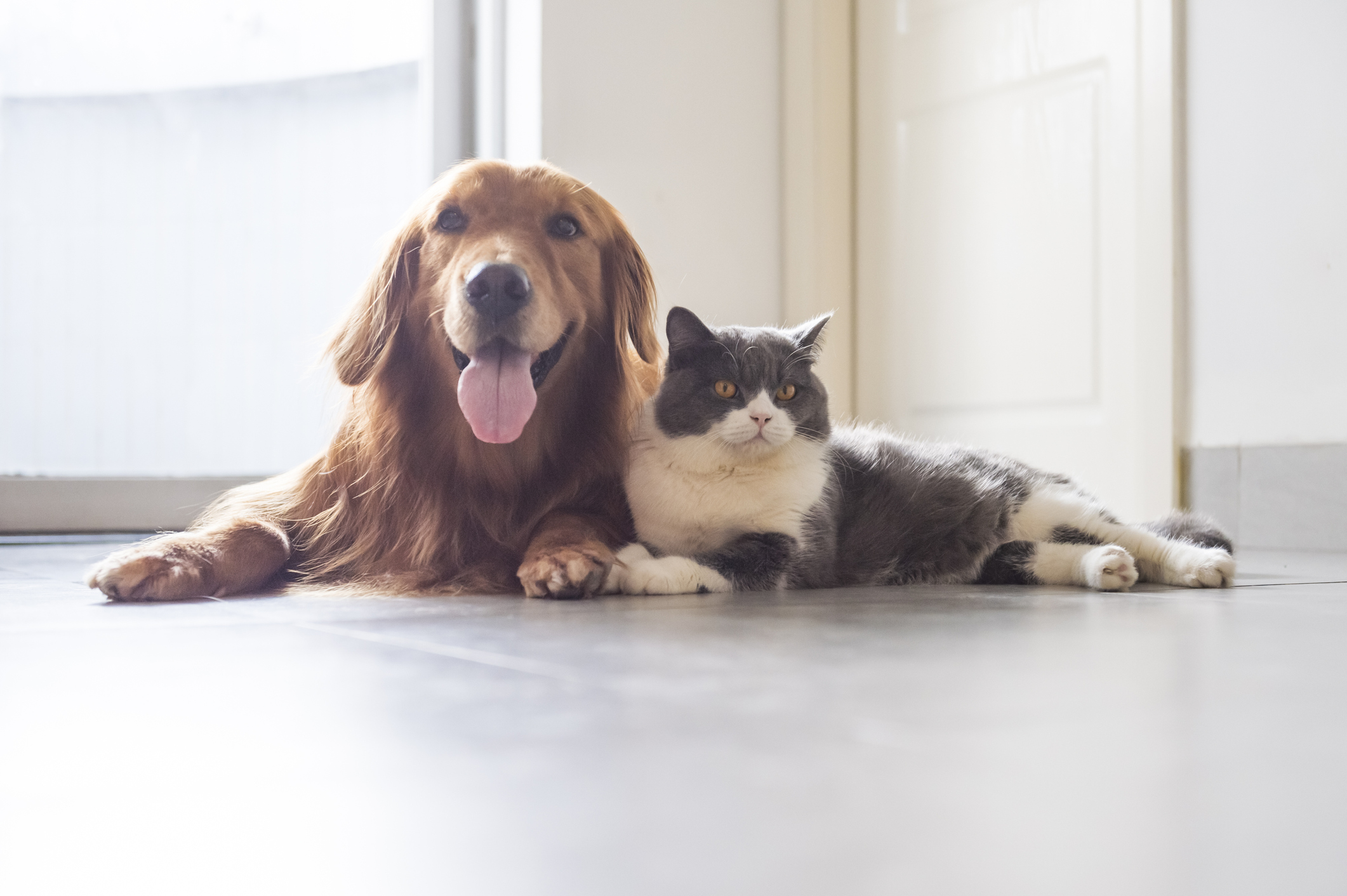 a dog and cat from the article What we know — and don't know — about how COVID-19 affects animals