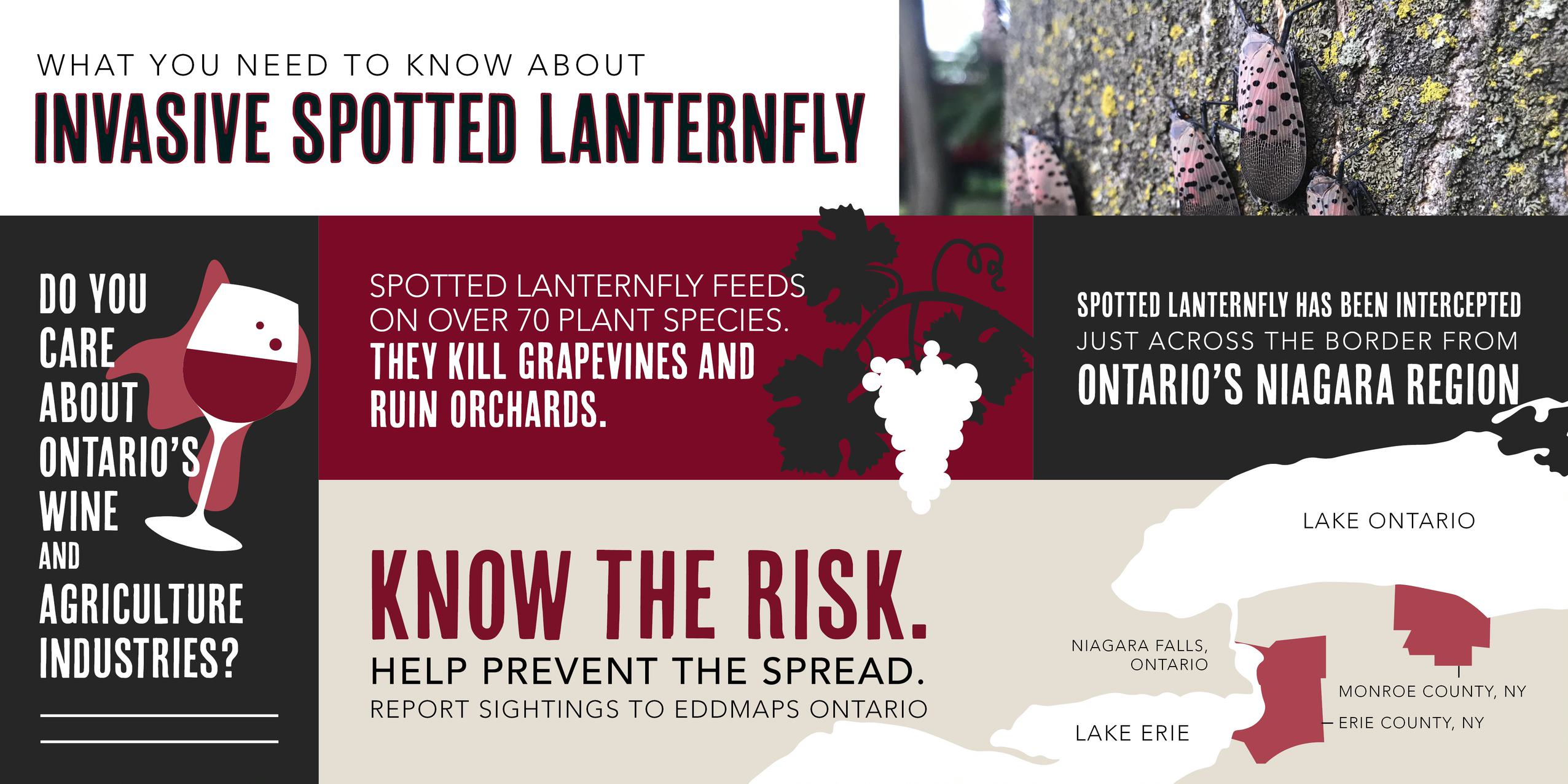 a brochure outlining the risks posed by the spotted lantern fly