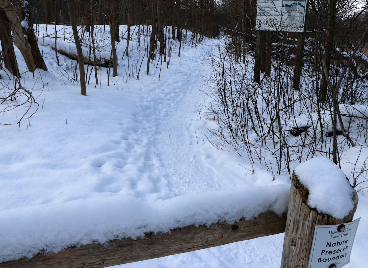 footsteps in the snow behind a fence
