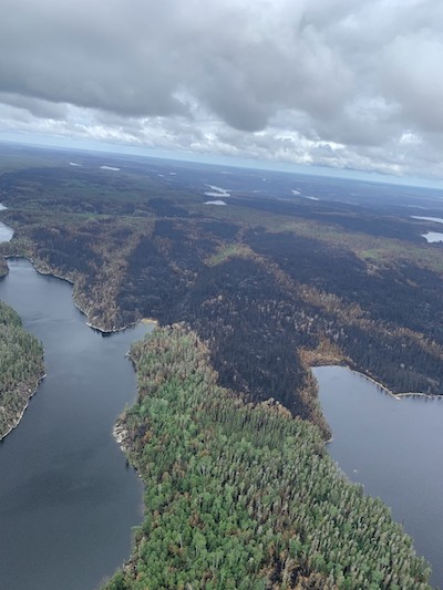 aerial shot of water and forests