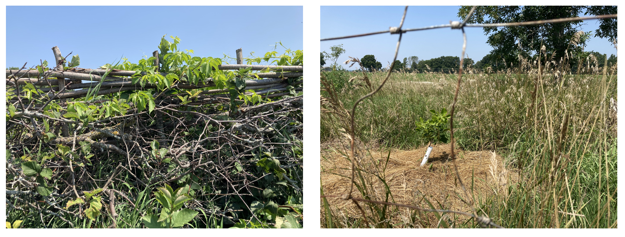 two views of grass and plants on a farm