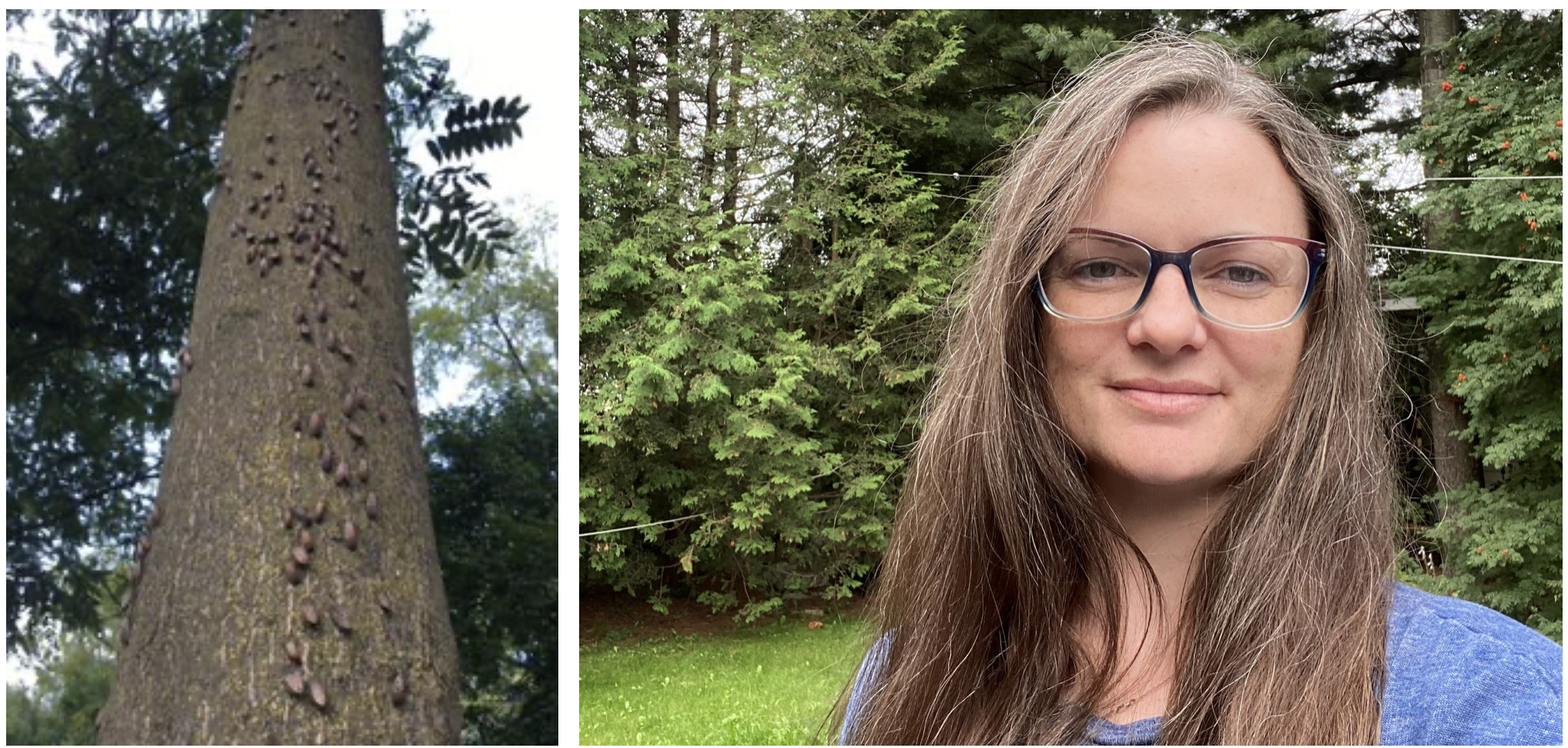 left: bugs on a tree trunk; right: a woman with long hair and glasses