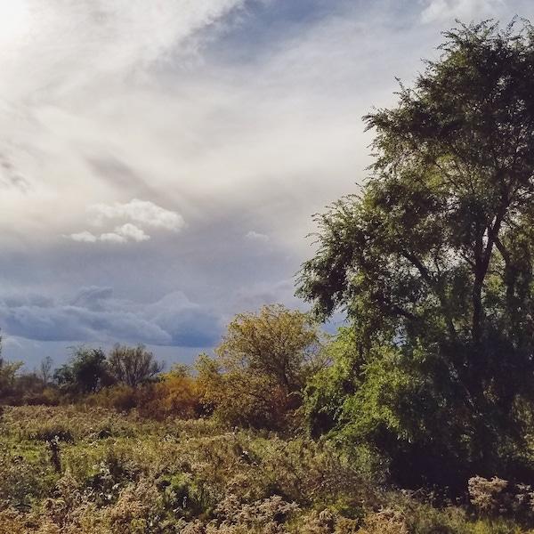 landscape on the Spit