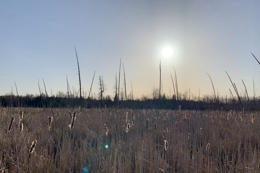 tall grasses under the sun
