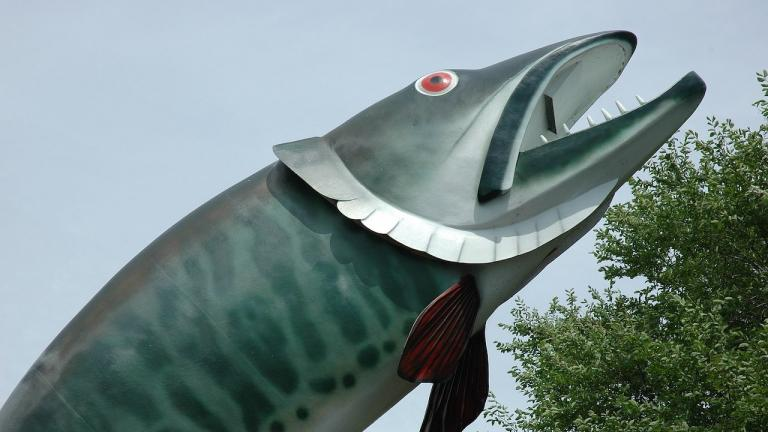 closeup of a large fish statue from the article Roadside-attraction showdown: Kenora's Husky the Muskie