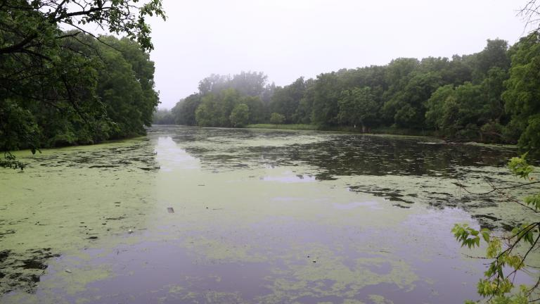 a pond ringed by trees from the article From trash to treasure: Turning former landfills into parks