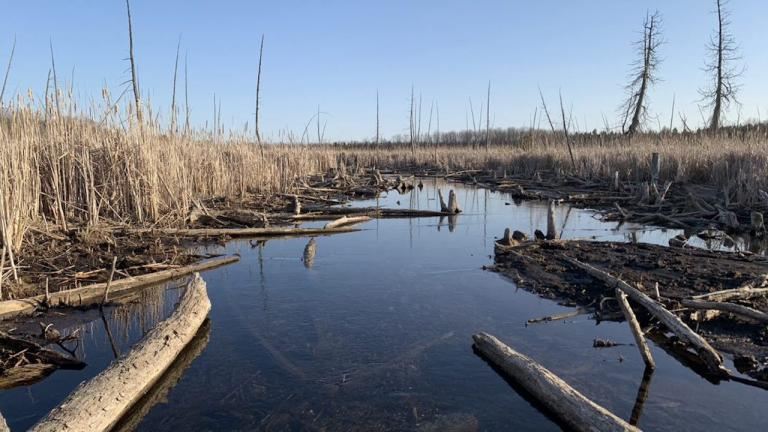 an expanse of water surrounded by reeds  from the article Is relocating wetlands the way to save them?