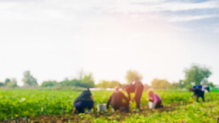 Workers on a farm field