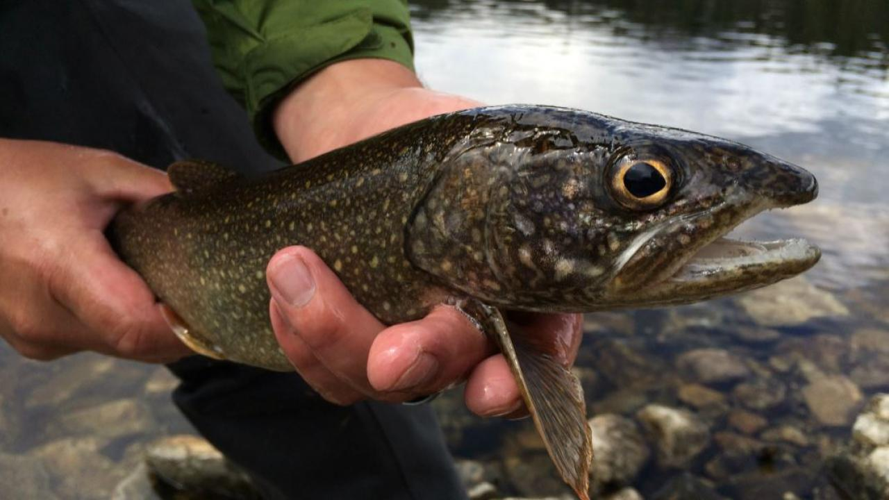 person holding a lake trout