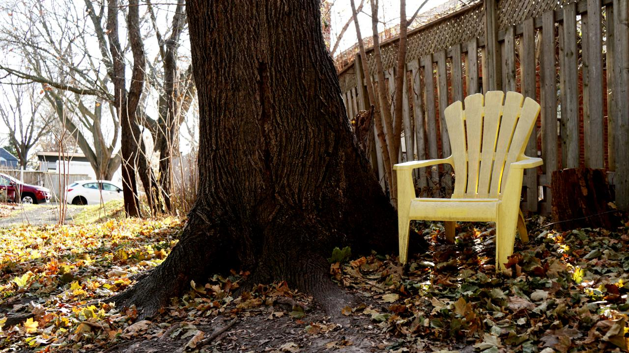 Lawn chair next to a large tree trunk. Fence in background.