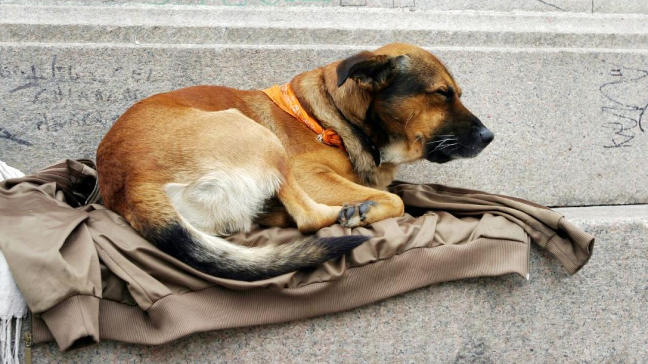 a dog lying on a jacket on a street