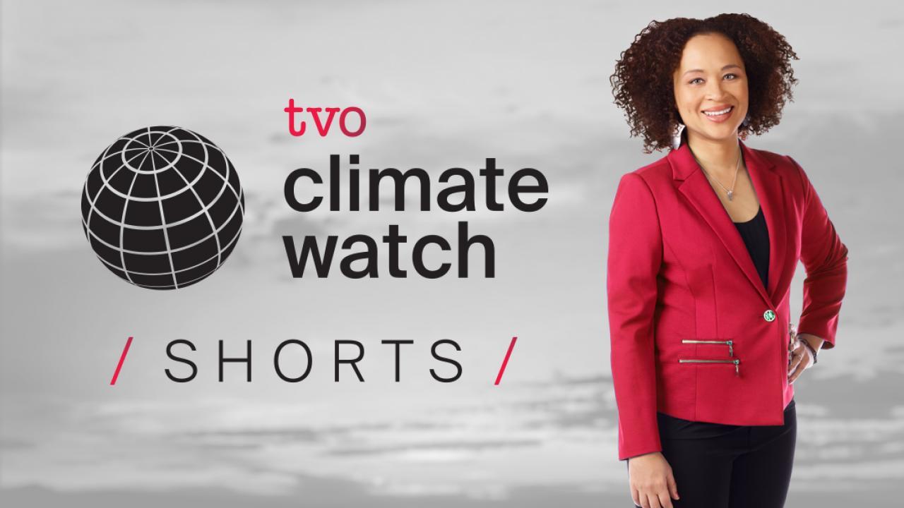 Host Nam Kiwanuka with the text Climate Watch Shorts
