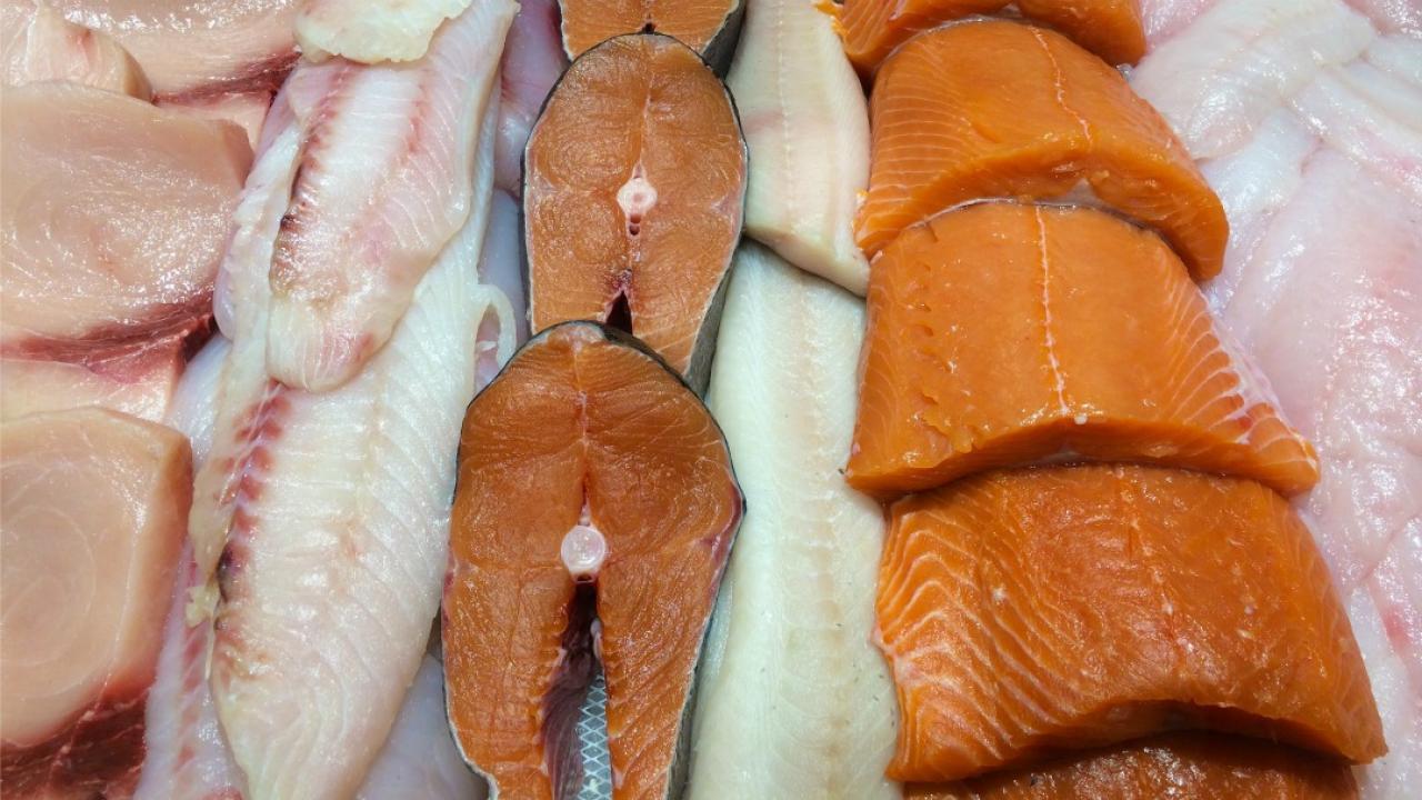 display of fish