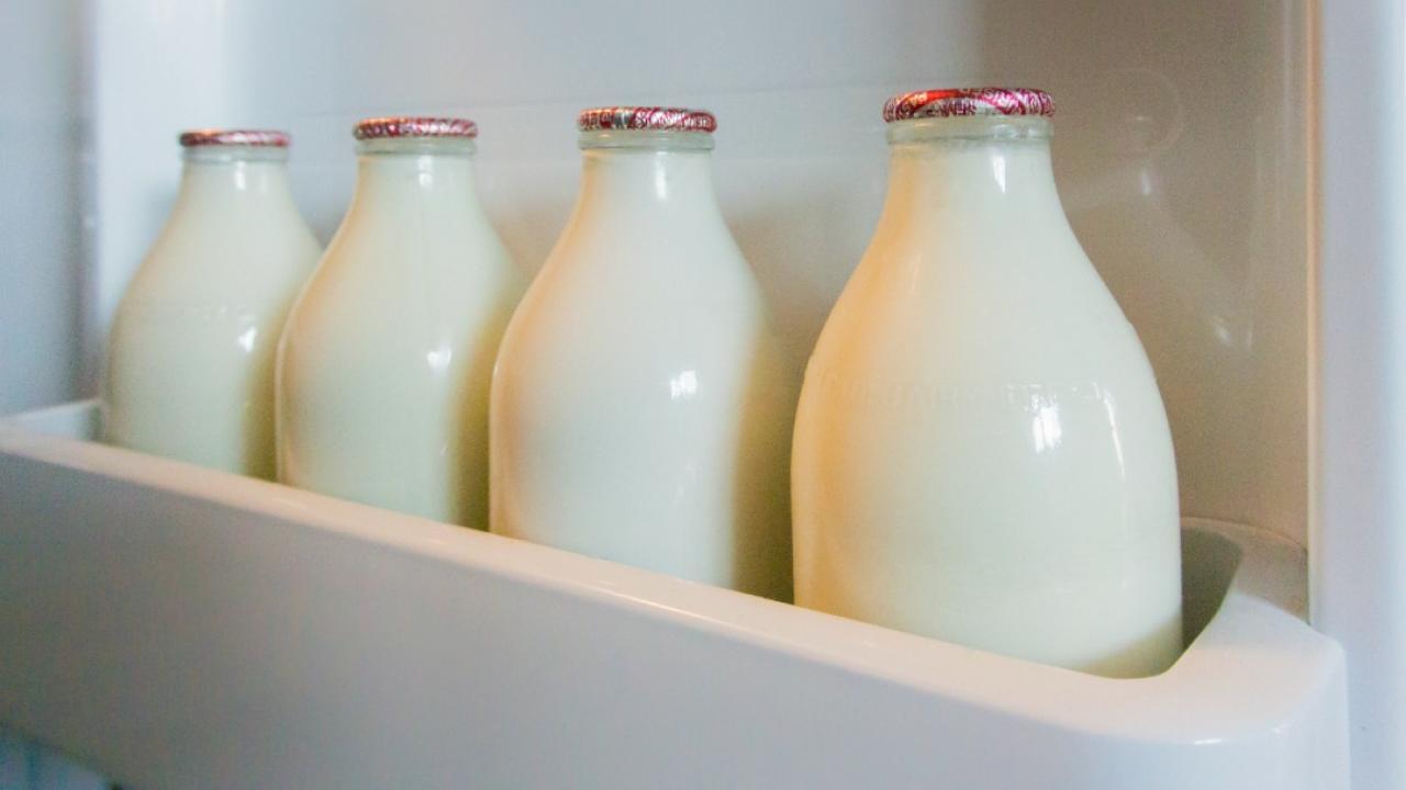 milk bottles in a row inside a fridge