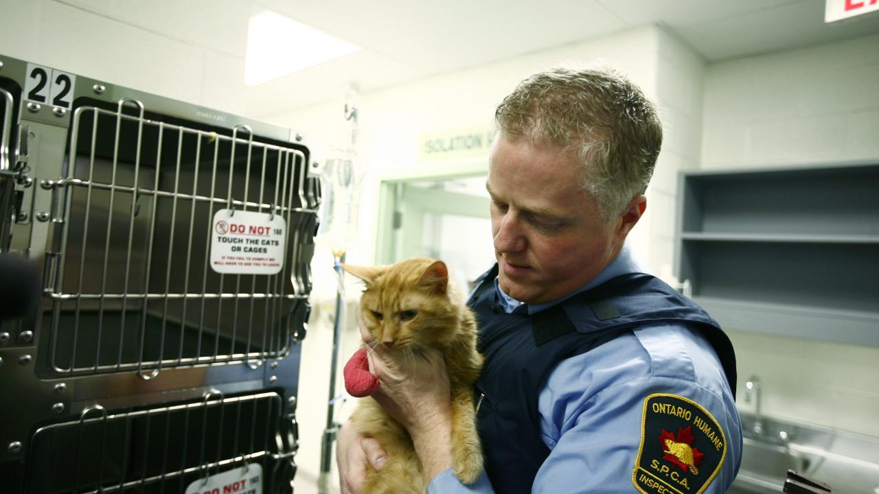 ospca agent with cat