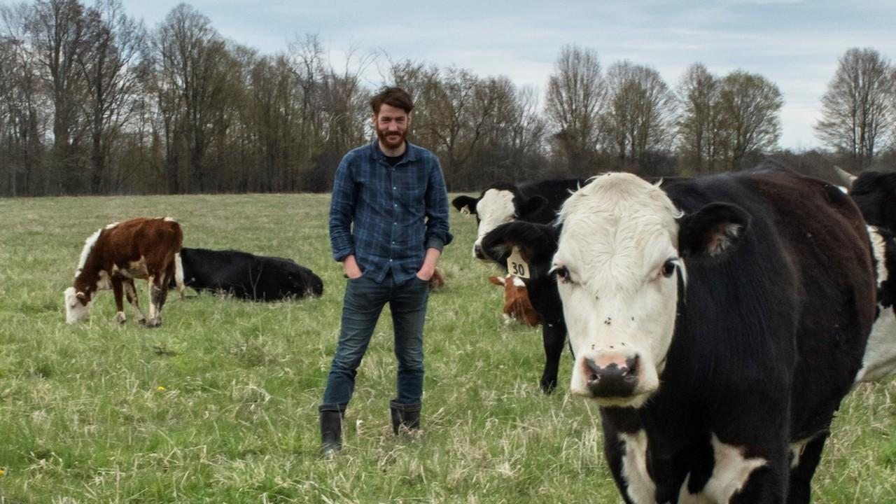 A man stands in a field with cows