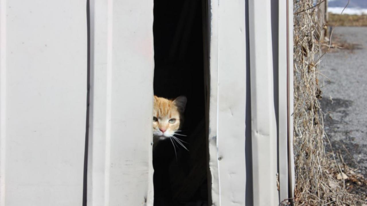 a cat peeking out of a building