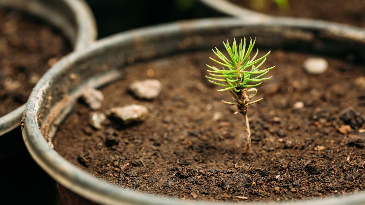 Small tree sapling growing in a flower pot