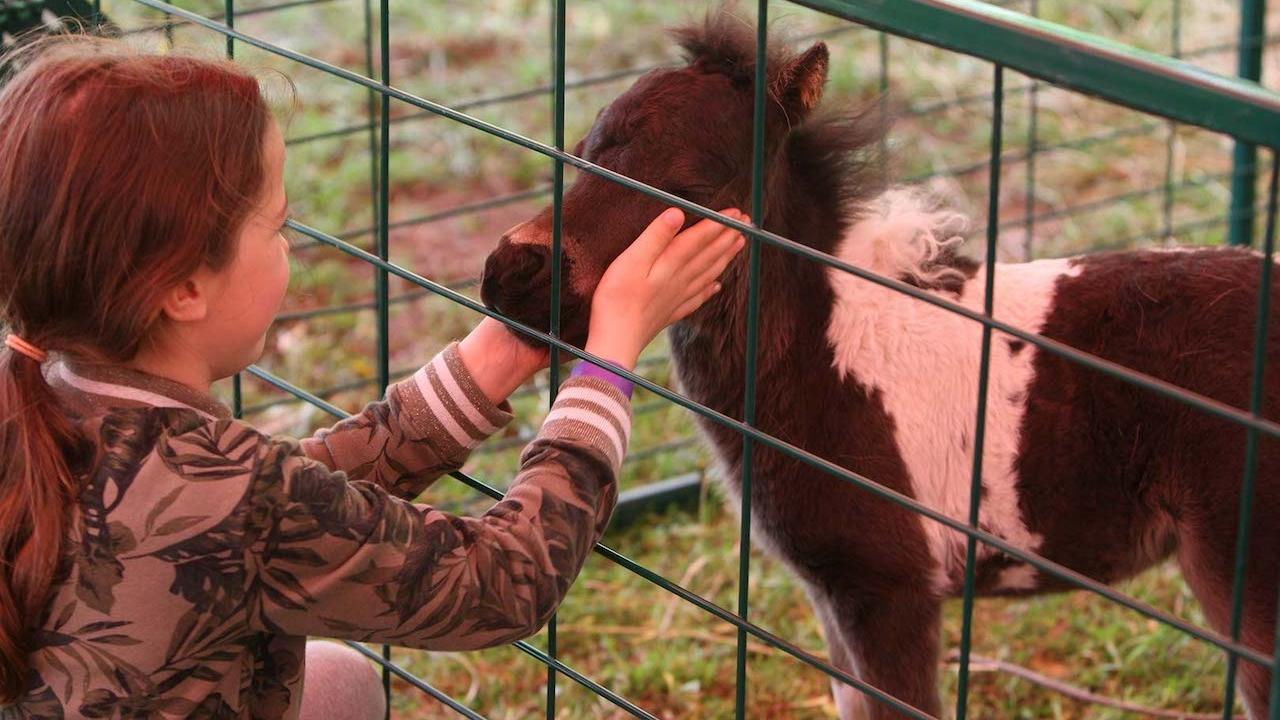 a girl and miniature horse