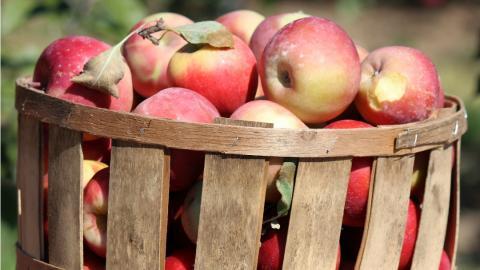 Basket of apples.