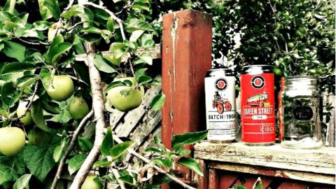 an apple tree with cans of craft cider beside it