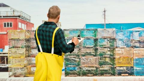 A man in yellow wetpants surveys a field of lobster cages
