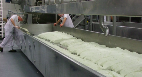 people making cheese in a factory