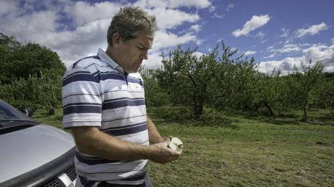 A farmer slices open an apple with an orchard in the background.