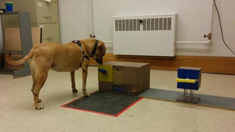 a dog taking part in an intelligence test