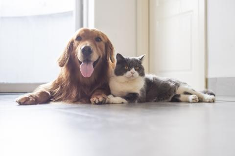 a dog and cat