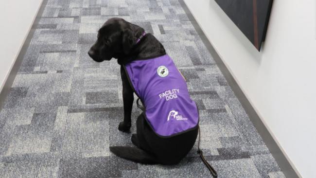 a service dog called Merel