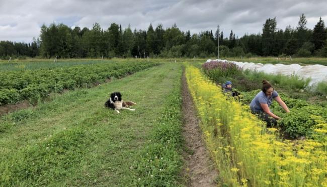 a farmer and dog