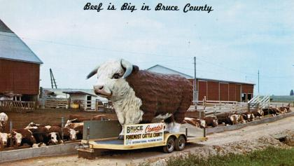 """postcard showing large fibreglass bull on a trailer with the words """"Beef is big in Bruce County"""" from the article Roadside-attraction showdown: Chesley's Big Bruce"""
